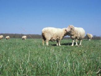 Foto: USDA/Wikimedia