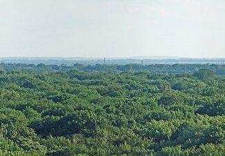 Wird wohl nie einen Frackingturm sehen - der Leipziger Auwald. Foto Martin Geisler / Wikimedia / Lizenz unter CC BY-SA 3.0