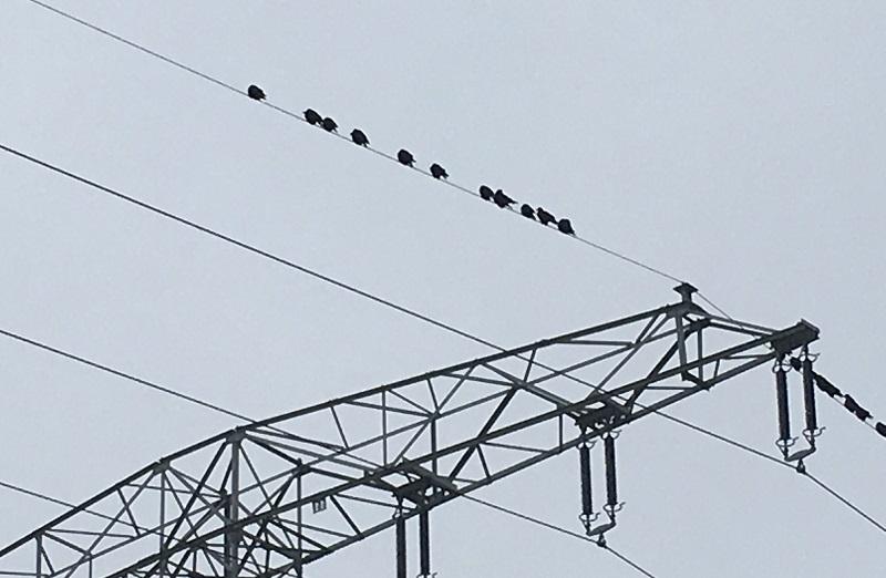 Krähen auf Mast, Redispatch, BNetzA, Systemdienstleistung