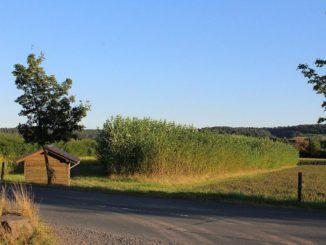 """Kurzumtriebsplantagen, wie hier am Firmengelände von Viessmann, brauchen ein langfristiges Investment und kontinuierliche Abnahme der daraus produzierten Holzhackschnitzel. Diese wiederum haben geringere Schadstoffe als """"normales"""" Brennholz. Foto: Urbansky"""