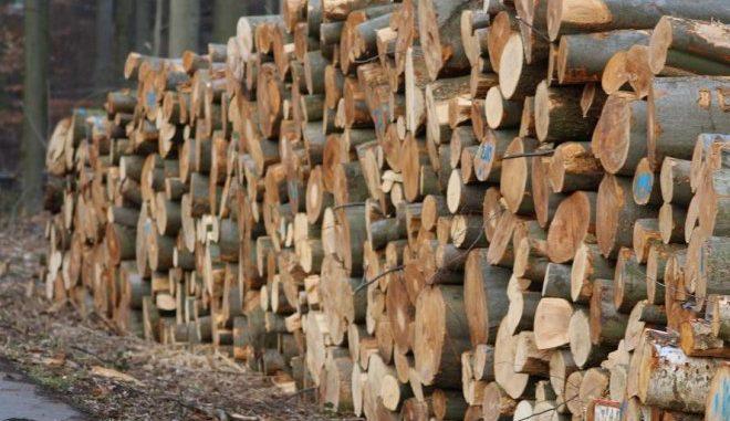 Ist und bleibt der bestimmende Brennstoff für Biomasse im Wärmemarkt: Holz. Foto: Urbansky