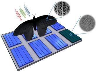 Darstellung der Nano-Schmetterlings-PV-Struktur anhand des natürlichen Vorbildes Pachliopta aristolochiae. Grafik: Radwanul H. Siddique, KIT / CalTech