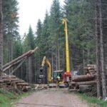 Holzqualität: Vertrauen ist gut, Kontrolle ist besser
