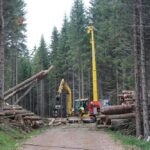 Brennholz ist nicht immer nachhaltig