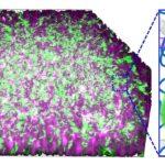 Bakterien könnten als Cyborgs eingesetzt werden