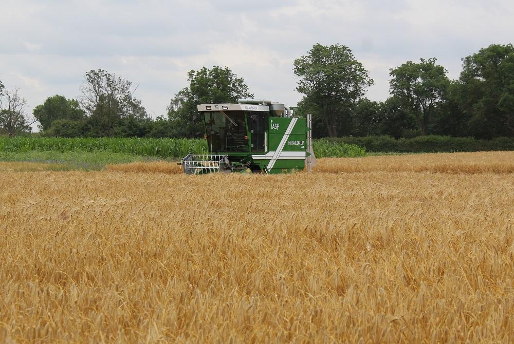 Pflanzenvielfalt in Deutschland nimmt drastisch ab