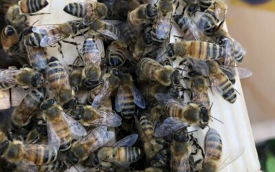 Politik will Rückgang der Artenvielfalt stoppen