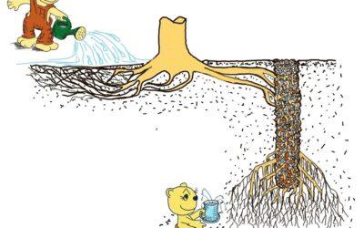 Tiefere Bewässerung rettet Bäume bei Trockenstress