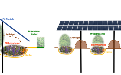 Bodenerosion mit Solaranlagen verhindern